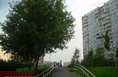 Деревья в районе Орехово-Борисово Южное