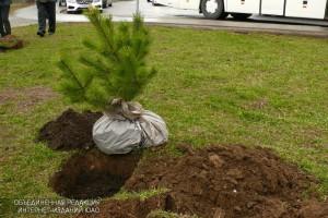 Озеленение района Орехово-Борисово Южное начнется в апреле