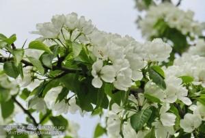 Цветы в Южном округе