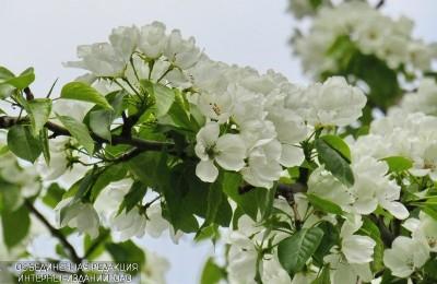 Цветы в районе Орехово-Борисово Южное