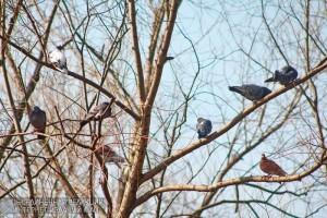 Голуби в Южном округе
