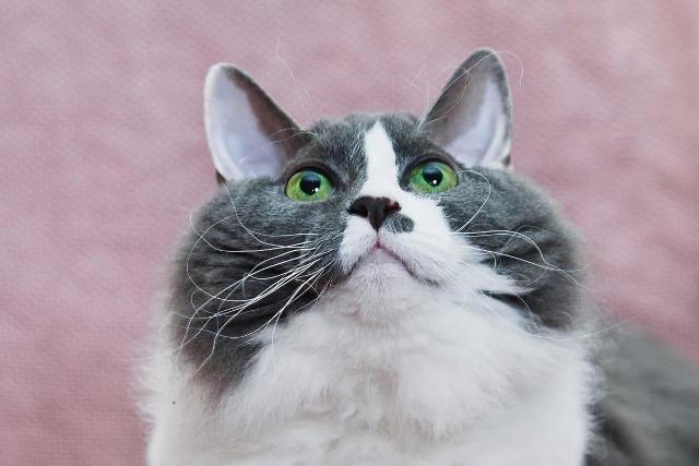 Кошка Фиона
