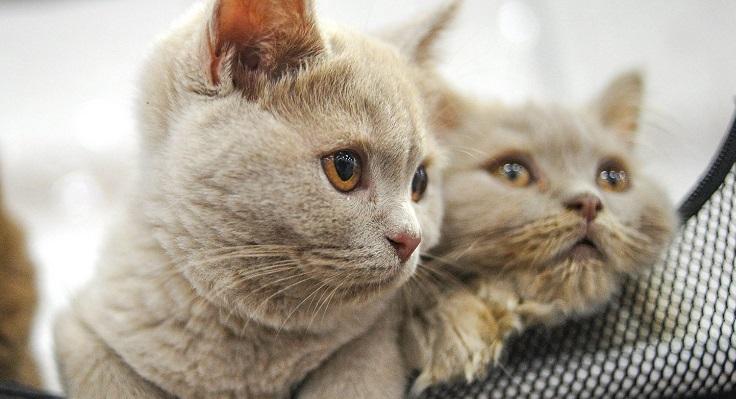 Ветеринария, УЗИ, акция, домашние животные, кошки