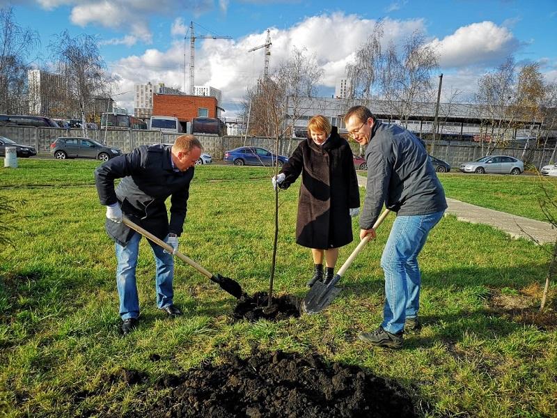 деревья, экология, местное самоуправление, Орехово-Борисово Южное