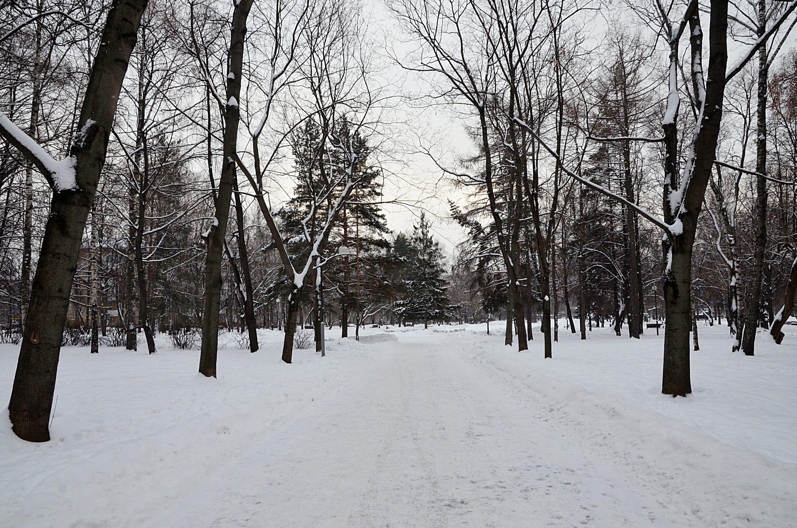 Участники проекта «Московское долголетие» из района подготовили новую виртуальную выставку. Фото: Анна Быкова